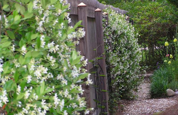 Выбор кустарников для живой изгороди