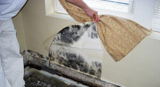 Заделка швов на стенах из осб плит