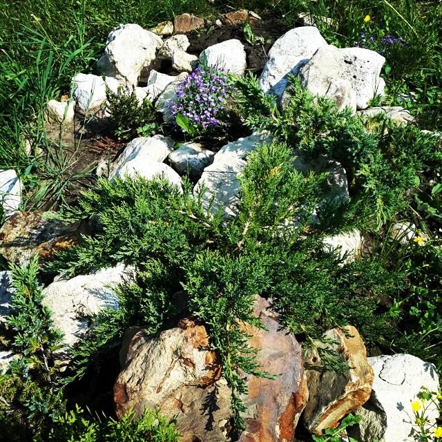 Формирование альпийской горки с хвойными растениями