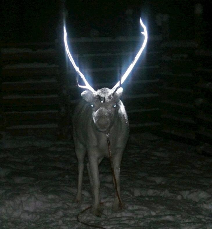 Краска светоотражающая для животных
